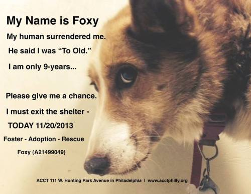 Don't let her being dumped by her 'owner' be her last memory!