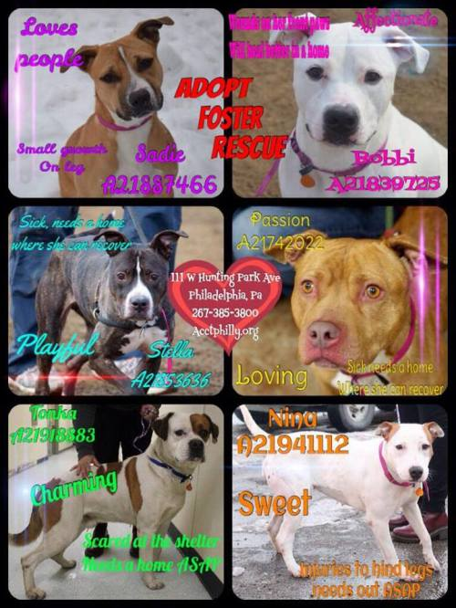 ACCT PHILLY'S MOST URGENT!!!