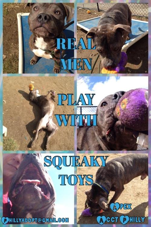 Real Men Play With Squeaky Toys