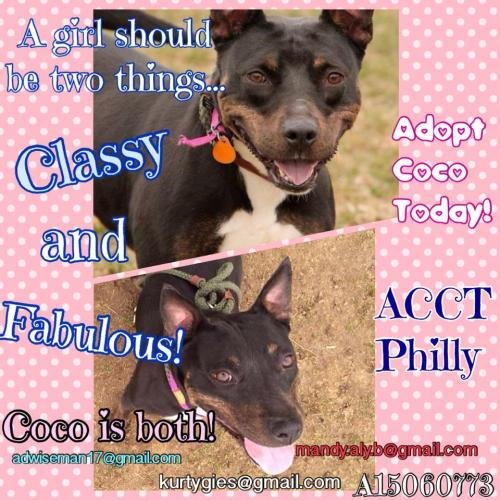 Coco-ACCT's Longest Resident!! Needs out!