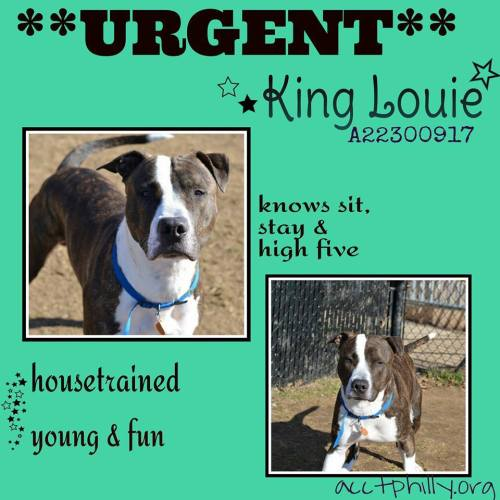 King Louie Needs Out By Tonight!