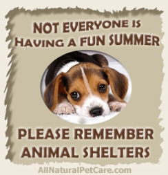 Summer-Animal-Shelter